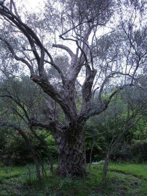 dsc09949 rasadnik ekoplant, Podgorica