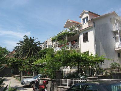 img_1085 kiwi, Kotor