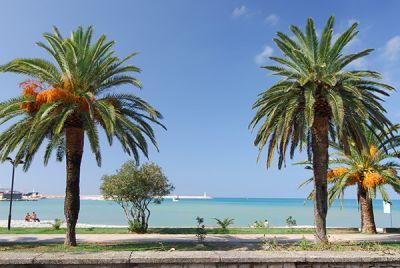 15 princess - beach & conference resort, Bar
